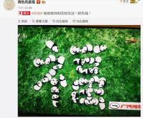 转发这群萌萌哒的熊猫,收下传祺送上的大写福字