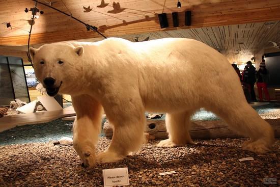 斯瓦尔巴大学是当地一个主要的机构,于1993年成立,现在共有学生500多人,开设了4个专业,主要是围绕北极地质、气候、环境等等展开的。斯瓦尔巴大学的建筑构造,从远处看就像一艘战舰停在后面的北冰洋之中,很有气势与特色。学校里面的设施很齐全,内部建筑构造也经过了精心的设计,将极地环境与建筑学很好地融合起来。因为地理位置的特殊性,以及独特的建筑构造,这个学校已经成了朗伊尔城当地的一个地标性建筑。
