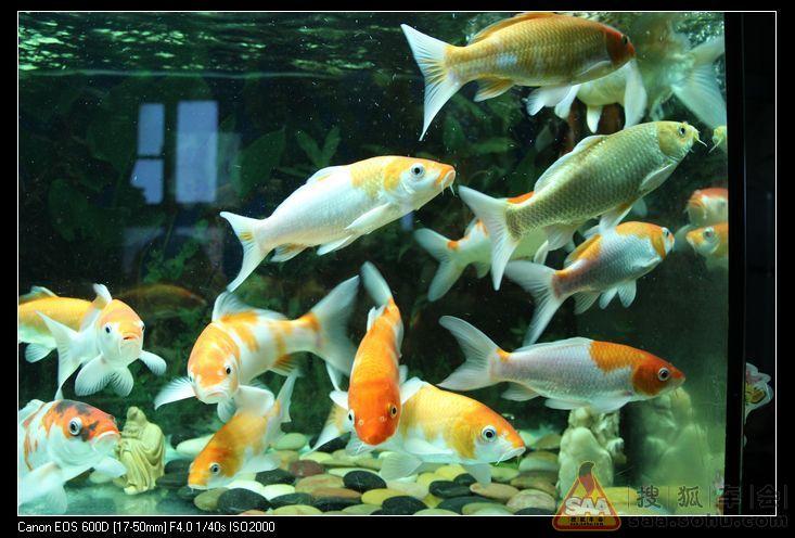 刚开始哪几年养鱼时先养热带鱼.孔雀、红箭、灯鱼、鹦鹉