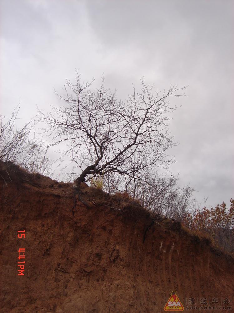 一棵树的风景