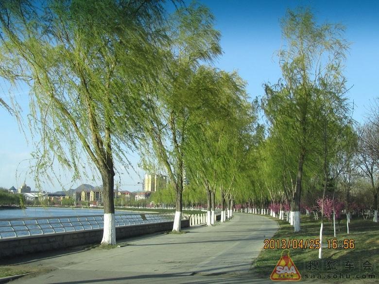 春天小燕子柳树图片