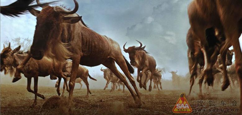 最震撼的奔跑:非洲野生动物大迁徙